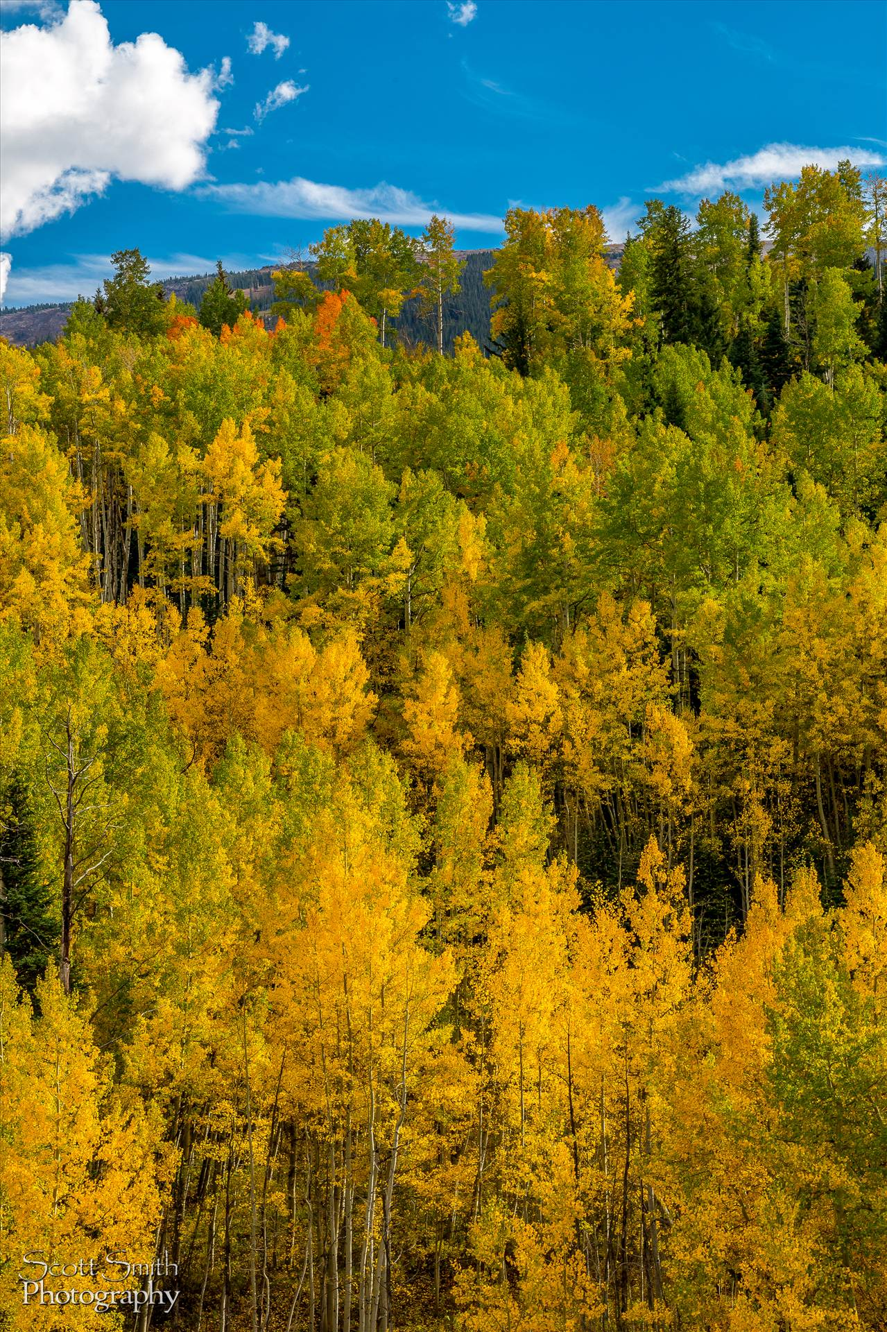 Snowmass Wilderness Area Fall Colors - Fall colors in Colorado, just outside of Snowmass Village by Scott Smith Photos