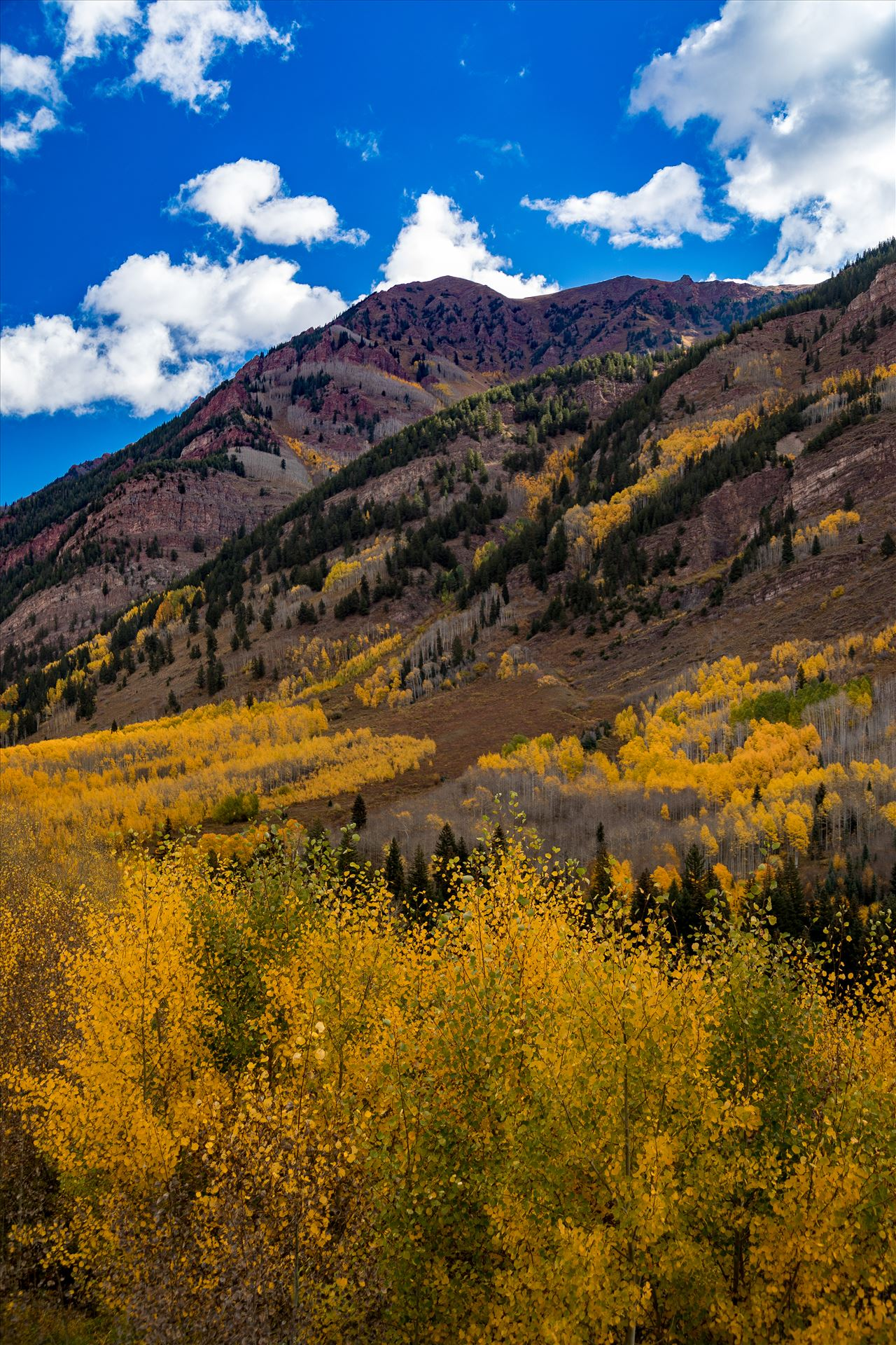 Fall in Aspen Snowmass Wilderness Area No 3 -  by Scott Smith Photos
