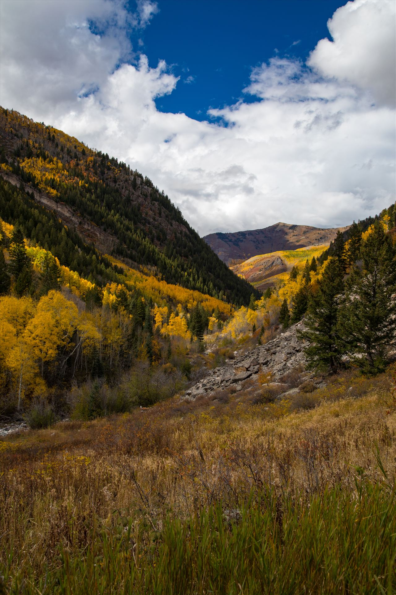 Snowmass Wilderness Area No 3 - Fall grasses and valley in the Snowmass Wilderness Area. by Scott Smith Photos