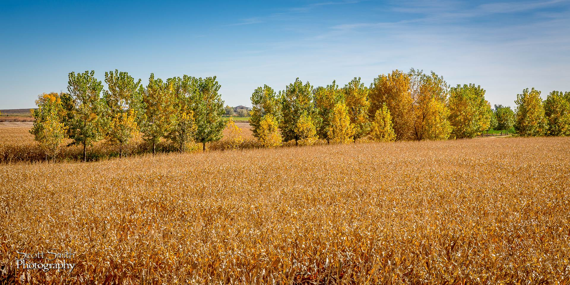 Field - Anderson Farms, Erie Colorado. by Scott Smith Photos
