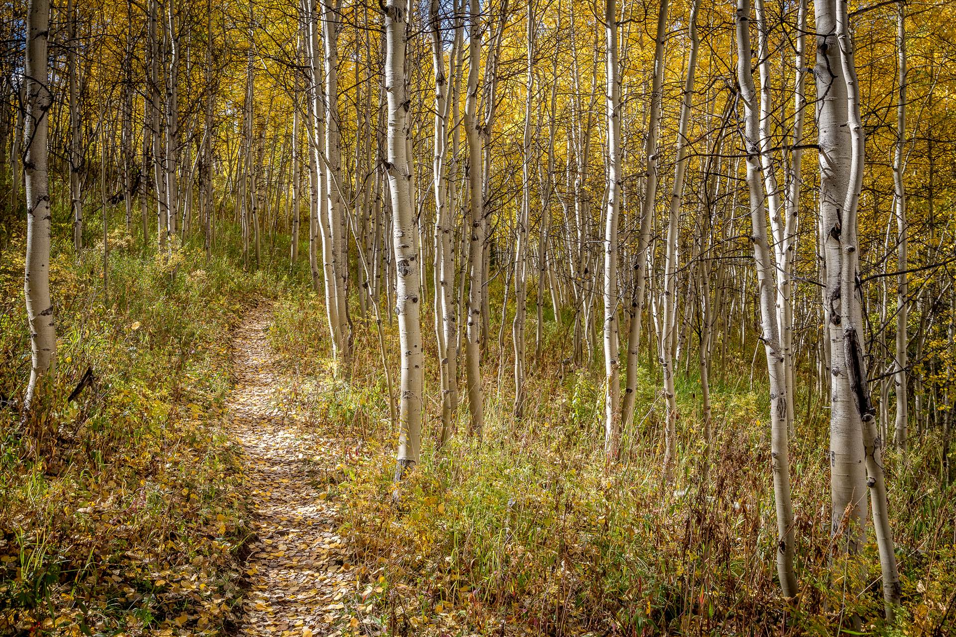 Hiking on Rim Trail -  by Scott Smith Photos