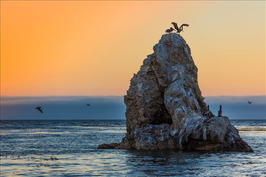 Pelicans roosting, taken from the edge of the beach Pismo Beach, California