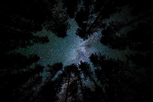A beautiful view of the milky way from our campsite at Turquoise Lake, Leadville Colorado, adjusted for portrait view.