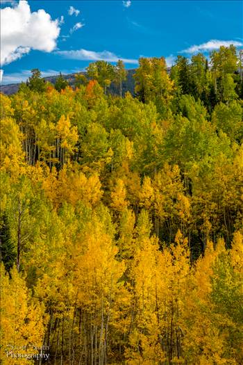 Fall colors in Colorado, just outside of Snowmass Village